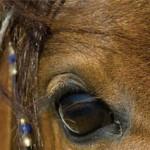 equine_eye